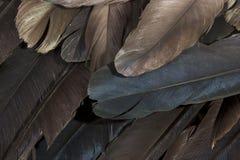 Schicht Vogel-Federn, die verschiedene Farben zeigen stockfotografie
