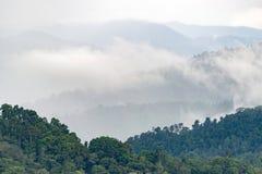 Schichten des hohen Berges, nebelig auf Regenwald Stockfotografie