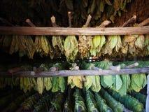 Schichten Tabak lässt Trockner in einer Scheune Lizenzfreies Stockfoto