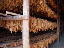 Schichten Tabak lässt Trockner in einer Scheune Stockfotos