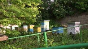 Schießen mit dem Garten des Schieberbienenhauses im Frühjahr stock video footage