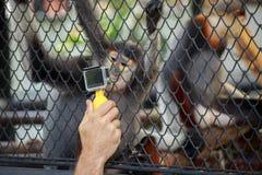 Schießen Sie ein Foto der Affe im Käfig Stockbilder
