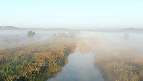 Schießen vom Brummen, am frühen Morgen fliegend über den nebelhaften Fluss stock footage