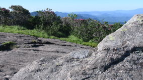 Schieben Sie nach rechts vom Rhododendron zum hinteren Felsen stock video footage
