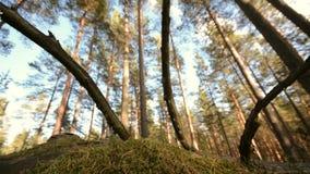 Schieber, der sich vorwärts bewegt Transportwagenbewegung entlang einem grünen Wald stock footage