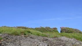 Schieber Pan des Felsens und des Spur geschnittenen durch Rhododendrons stock video footage