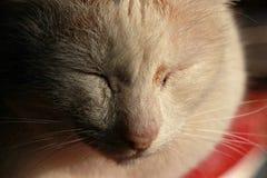 Schielen der Katze auf Portal des Gästehauses in Thailand Stockfotografie