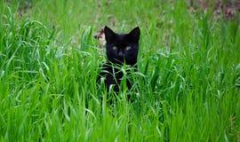 Schielende Katze, die Kamera betrachtet Stockfoto
