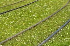 Schienen auf einem grünen Rasen mit Blumen Stockfotos