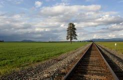 Schienen durch das Feld. Stockfotos