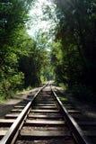 Schienen im Wald Lizenzfreie Stockfotografie