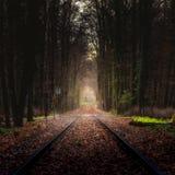 Schienen im Wald Lizenzfreies Stockbild