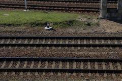 Schienenstrang Stockfoto