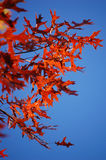 Schiera di colore rosso fotografie stock