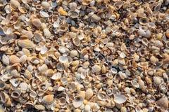 Schiereiland de Krim, de kust van het Overzees van Azov Het strand is covere Stock Fotografie