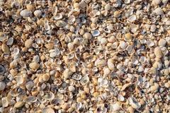 Schiereiland de Krim, de kust van het Overzees van Azov Het strand is covere Stock Foto