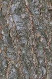 Schierlingsbaumrindehintergrund Lizenzfreie Stockbilder
