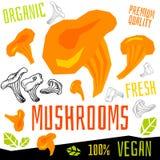 Schiet de verse organische groente van het pictogrametiket, van het de kruidenkruid van groentennoten van de de specerijkleur voe stock illustratie
