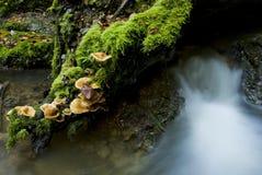 Schiet dichtbij rivier als paddestoelen uit de grond Stock Fotografie