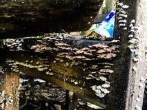 Schiet een partij in gebroken houten Koh Tao-eiland Thailand als paddestoelen uit de grond Stock Fotografie