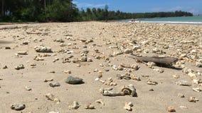Schifezza dell'eremita che cammina lungo la spiaggia stock footage