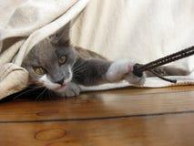 Schiff Cat Playing stockfotografie