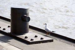 Schiffspoller und Seemöwe Stockbild