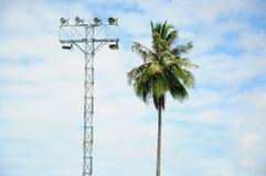 Schijnwerper en kokospalm Stock Afbeeldingen
