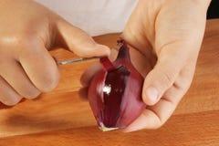 Schil één organische rode ui stock foto