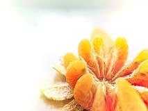 Schil oranje lotusbloem scherp op juiste achtergrond met licht Royalty-vrije Stock Foto's