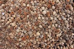 Schil van pijnboomfruit royalty-vrije stock fotografie