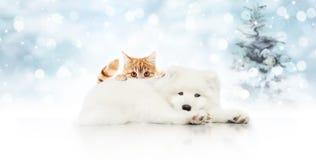 Schild der frohen Weihnachten oder Geschenkkarte für Geschäft für Haustiere, weißer Hund a lizenzfreie stockfotos