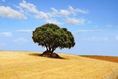 Schilderachtig aard landelijk landschap met gebieden Stock Foto's