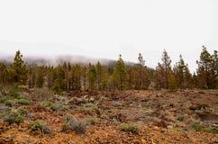 Schilderachtig bos Stock Foto's