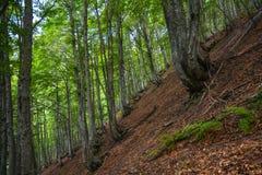 Schilderachtig bos op een steile berghelling Royalty-vrije Stock Foto's
