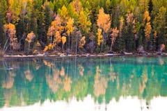 Schilderachtig de herfstlandschap van meer en boom Stock Foto