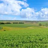 Schilderachtig groen gebied en blauwe hemel met lichte wolken Stock Foto