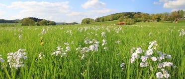 Schilderachtig moerasland met wildflowers en bewolkte hemel, Duitse lan Royalty-vrije Stock Foto's