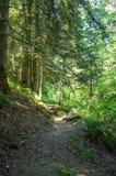 Schilderachtig voetpad door het bos Royalty-vrije Stock Fotografie