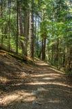 Schilderachtig voetpad door het bos Royalty-vrije Stock Afbeelding