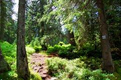 Schilderachtige bergsleep met mooi landschap Stock Afbeeldingen