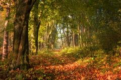 Schilderachtige de herfsttrai in het bos Stock Afbeelding