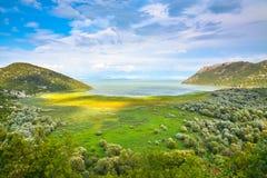 Schilderachtige die meerkust, met helder gras wordt overwoekerd Royalty-vrije Stock Foto's