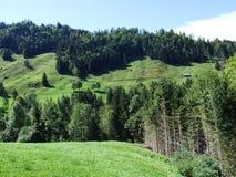 Schilderachtige heuvels, bossen en weilanden in Ostschweiz royalty-vrije stock foto