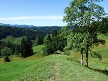 Schilderachtige heuvels, bossen en weilanden in Ostschweiz stock afbeelding