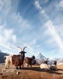 Schilderachtige mening van Matterhorn-piek en Stellisee-meer in Zwitserse Alpen stock foto's