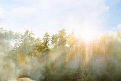 Schilderachtige mening van zonnig bos Royalty-vrije Stock Afbeeldingen