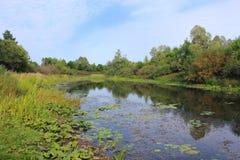 Schilderachtige vijver met waterlelies Royalty-vrije Stock Afbeelding