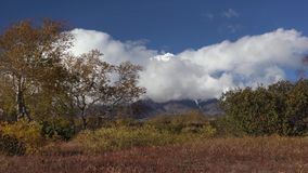 Schilderachtige vulkanisch zet landschap, mening van op kegelvulkaan, geeloranje bos stock videobeelden