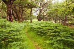 Schilderachtige weg in Schotse Hooglanden, het Nationale Park van Cairngorms, de lente bosscène van Schotland, het Verenigd Konin stock afbeelding
